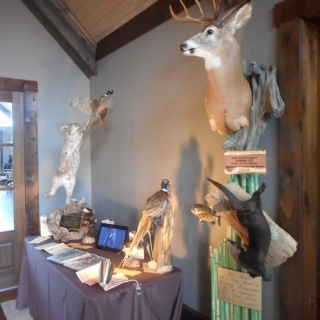Thank you to Uniques Taxidermy for the displays